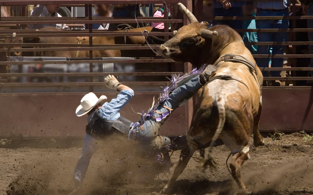 Professional Bull Riding, Monster Trucks, Fairs and Firearm Show this April