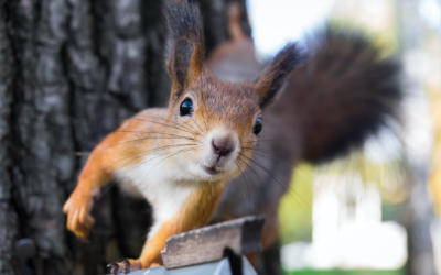 Ranchland Radio Podcast – Even Blind Squirrels Get Lucky!