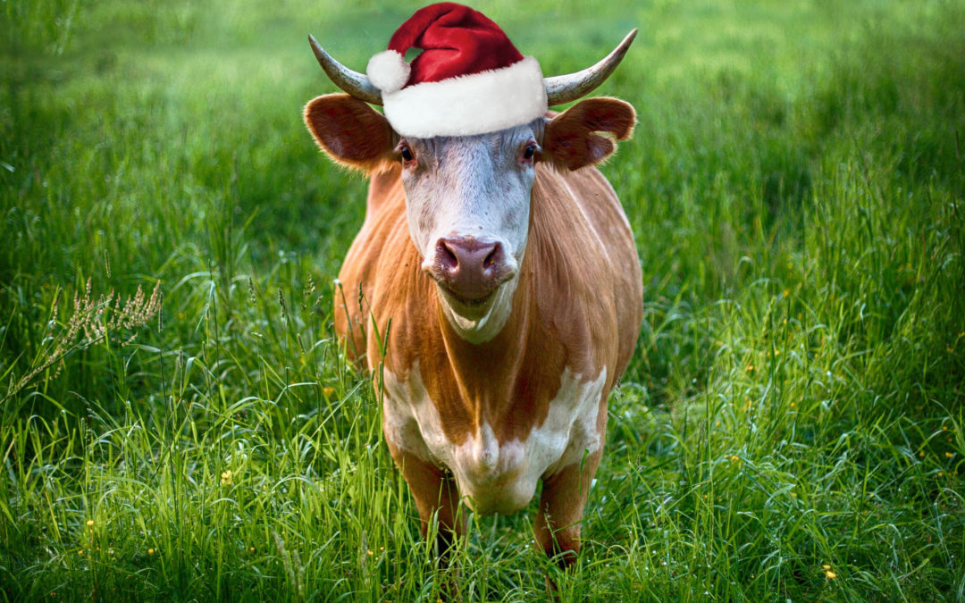 Run with the Bulls in The Valley Of Lights This Christmas?